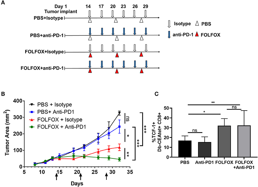 Frontiers Folfox Chemotherapy Ameliorates Cd8 T Lymphocyte Exhaustion And Enhances Checkpoint Blockade Efficacy In Colorectal Cancer Oncology