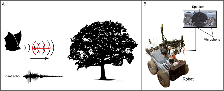 Figure 1 - (A) Bats sense the world by emitting sounds and processing the returned echoes.