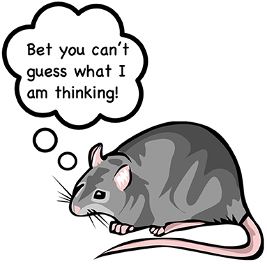 Figure 1 - How do you test a rats memory? (Art by Jessica Forsstrom).