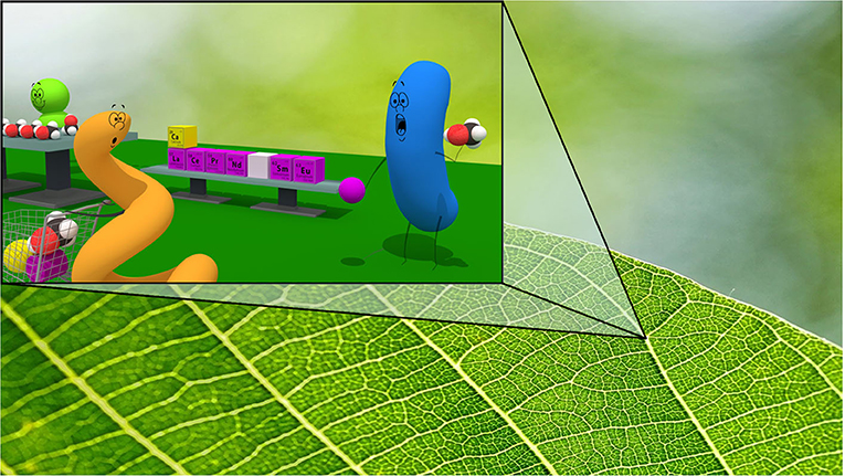 Figure 3 - Bacteria live on plants so they can use substances that are found on leaf surfaces.