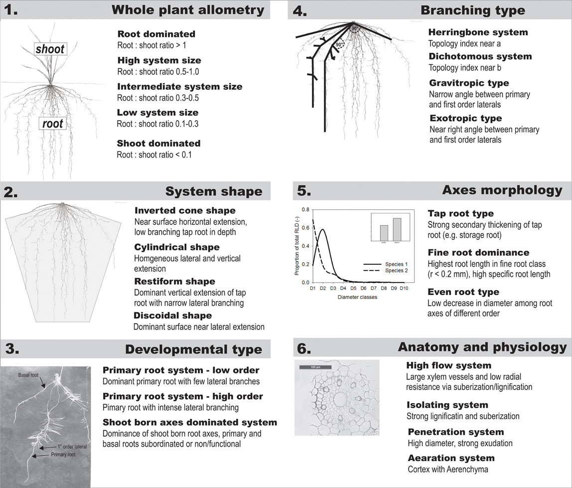Frontiers | A statistical approach to root system