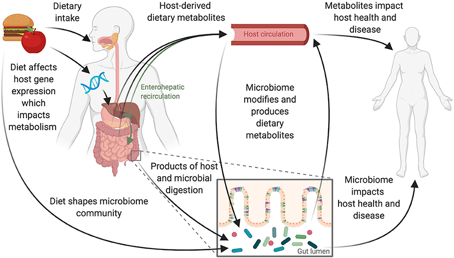 how diet effects microbiome