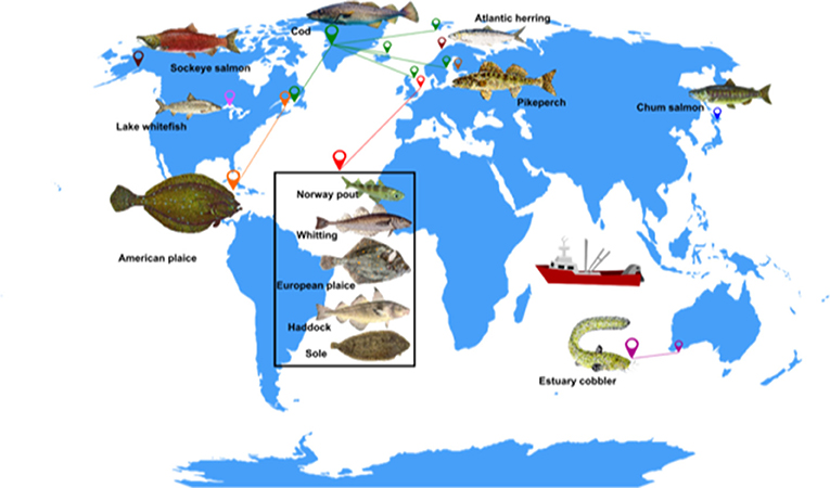 """Figure 1 - Examples of fish species that exhibit the """"live fast, die young"""" strategy."""