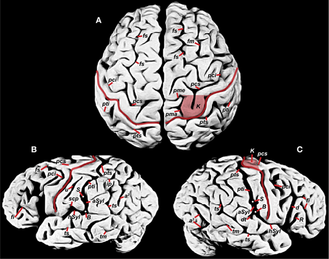an introduction to the article on the size of einsteins brain Learn more about perception and how we perceive objects in our environment through the perceptual process  perception and the perceptual process,  size of the.