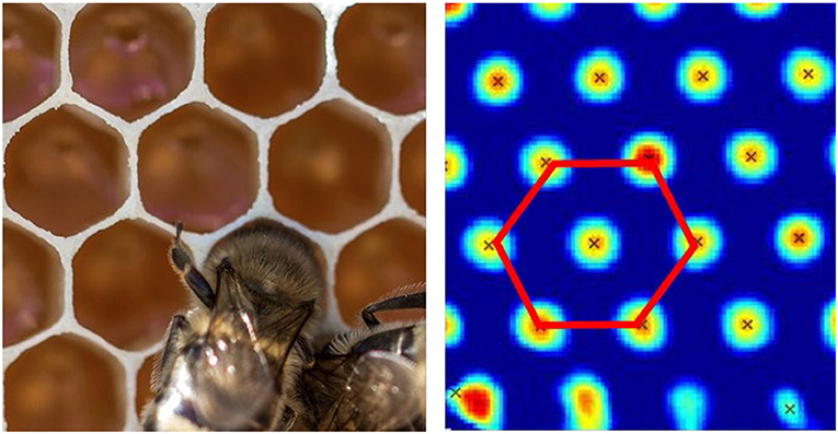 Figure 5 - The functioning of a grid cell resembles the shape of a beehive.