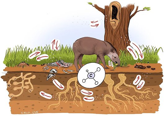 Figure 2 - Interactions between organisms are part of the carbon cycle.