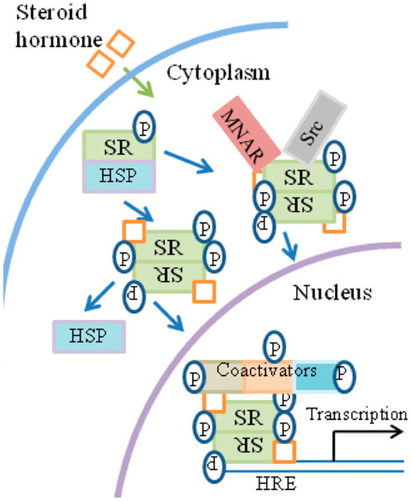 Frontiers | IFN Signaling: How a Non-Canonical Model Led to the