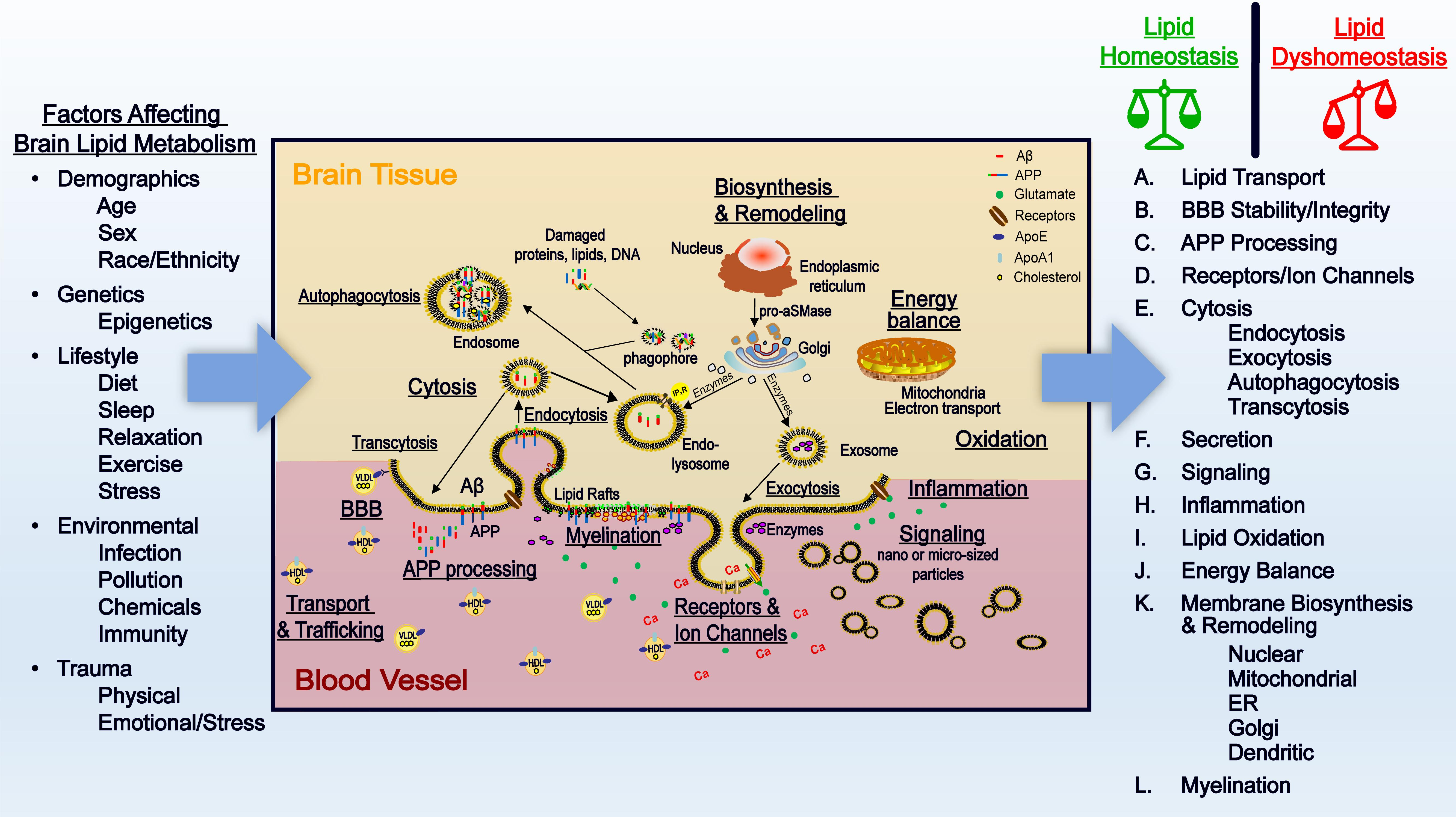 Frontiers Involvement Of Lipids In Alzheimer S Disease Pathology And Potential Therapies Physiology