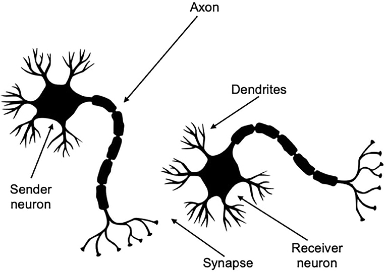 """Figure 1 - The structure and function of a nerve cell (a """"neuron"""")."""