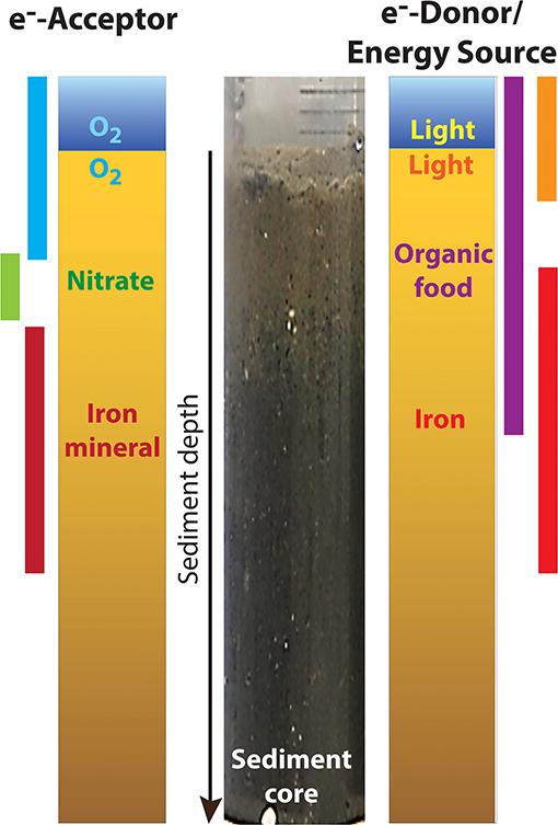 Figure 1 - Geochemical gradients in marine sediments.