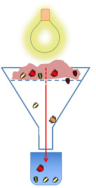 Figure 1 - Isolating soil invertebrates for study.