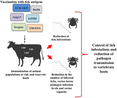 frontiers tick vaccines and the control of tick borne pathogenswww frontiersin org