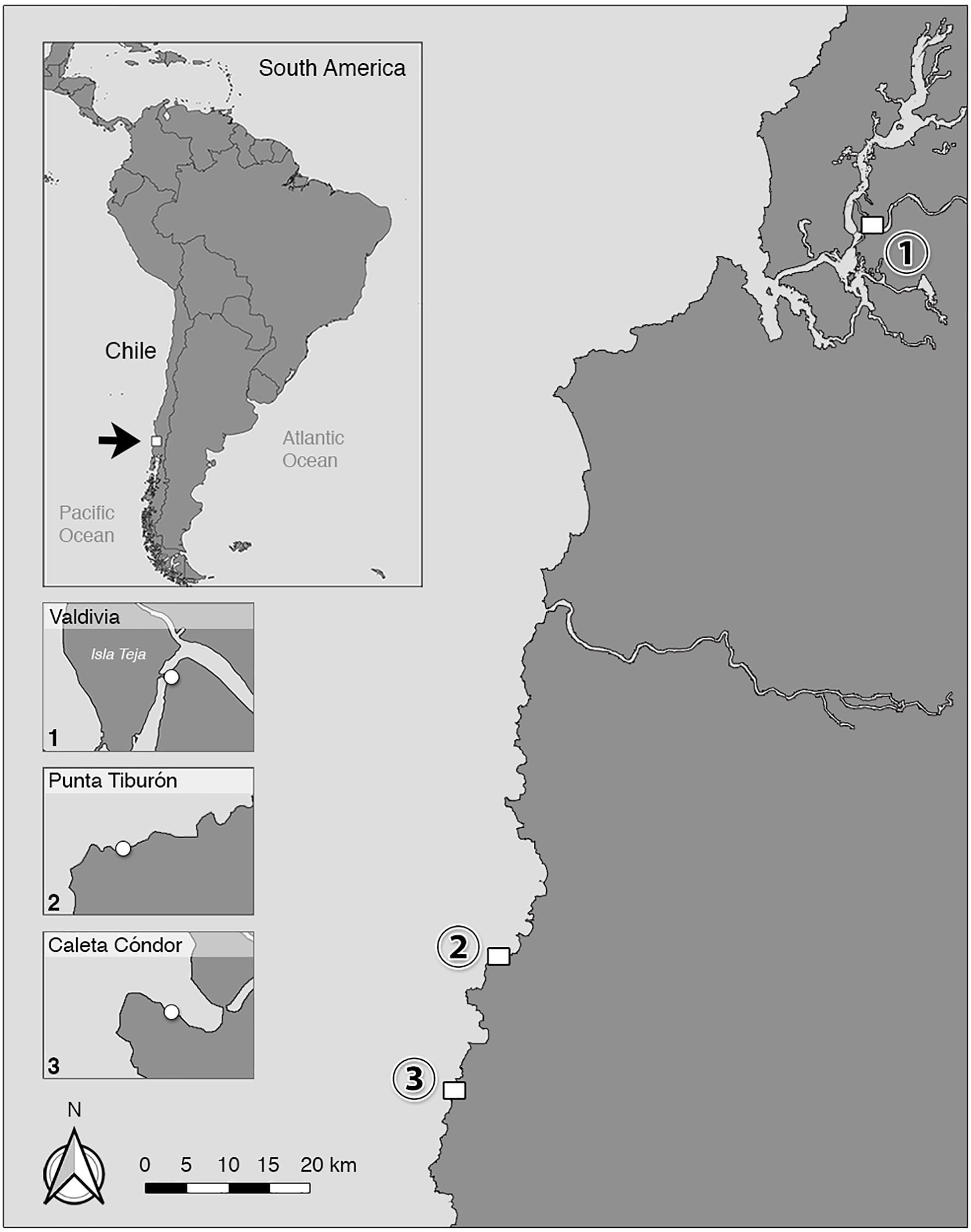 trichinella anthropozoonosis