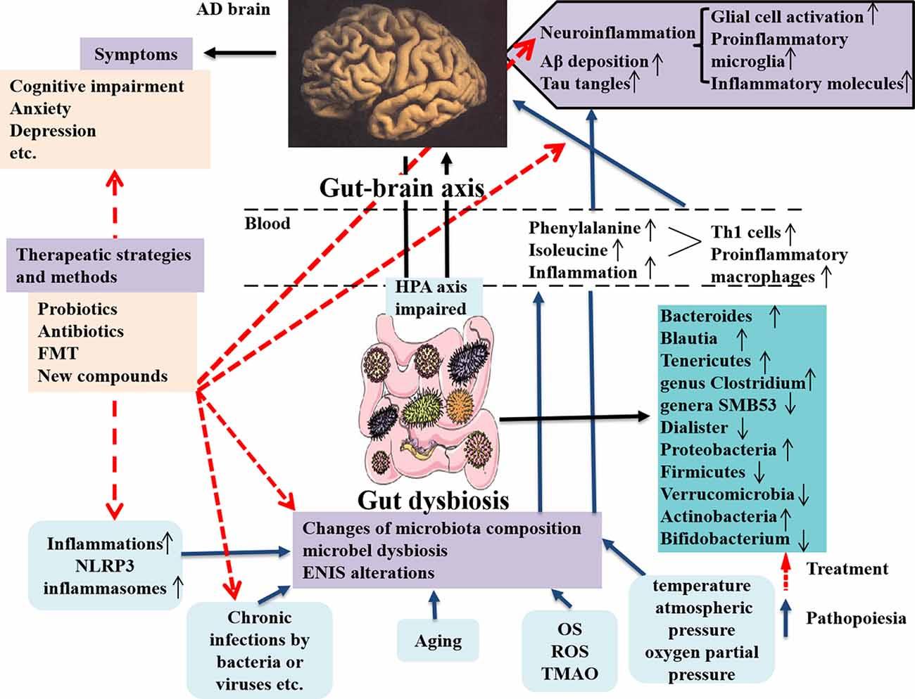 dysbiosis opposite papiloame tratament pret