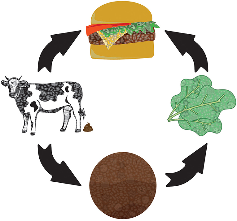 Figure 2 - Many pathways to a hamburger.