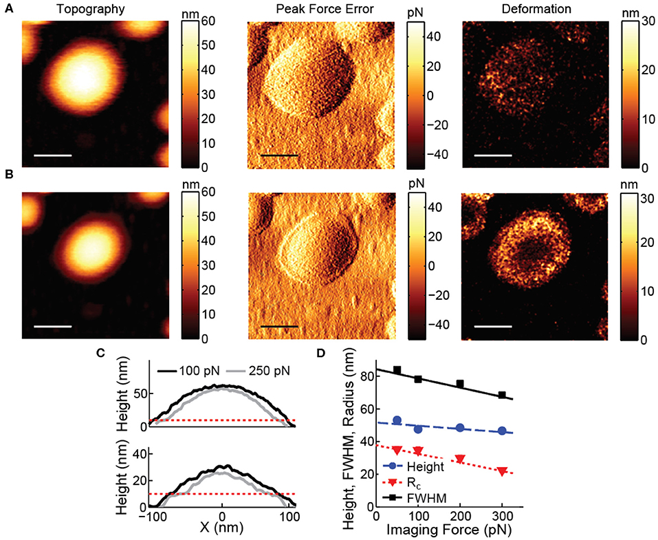 Frontiers | Mechanical Characterization of Liposomes and Extracellular  Vesicles, a Protocol | Molecular Biosciences