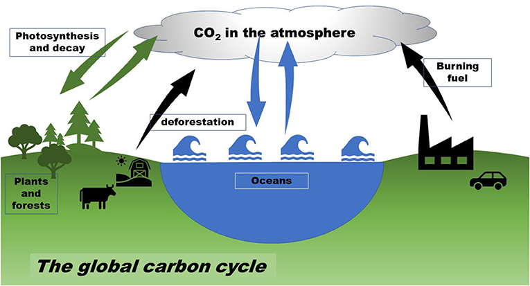Figure 1 - The global carbon cycle.
