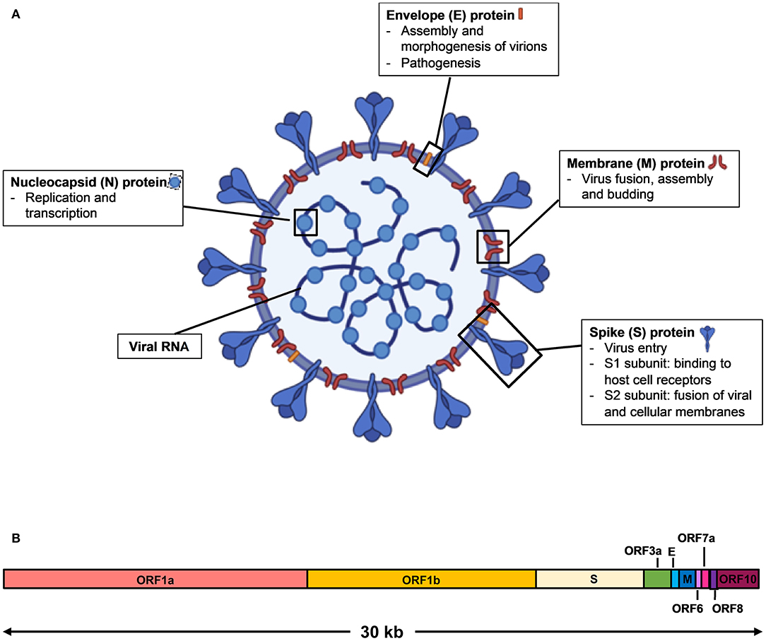Frontiers | Serological Approaches for COVID-19: Epidemiologic Perspective  on Surveillance and Control | Immunology