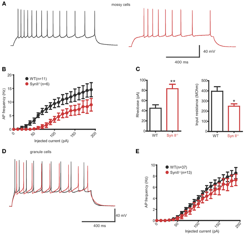 Frontiers Dentate Gyrus Network Dysfunctions Precede The