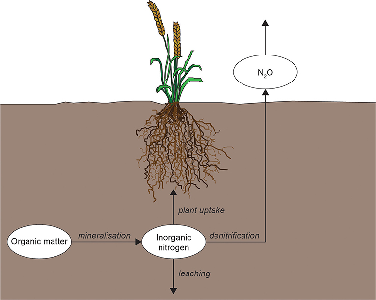 Figure 3 - Nitrogen is transformed by soil food webs so that it can move through plants, water, or air.