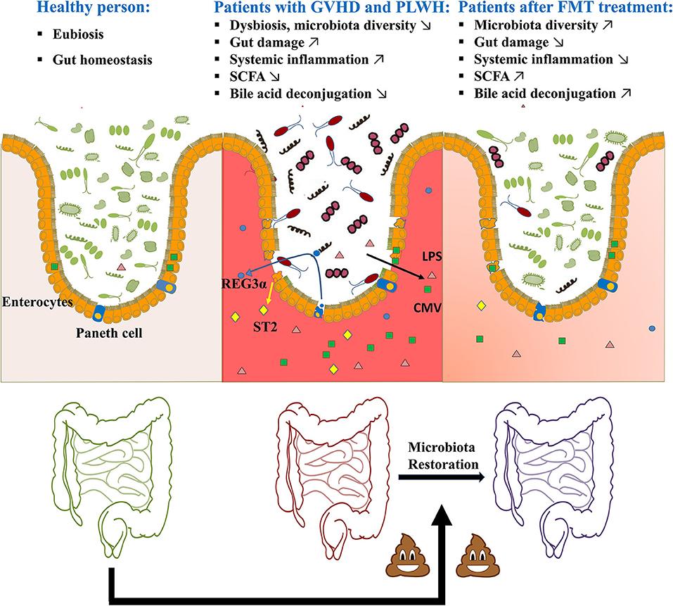 készítmények a férgek megelőzésére gyermekeknél hpv befolyásolja a szájat
