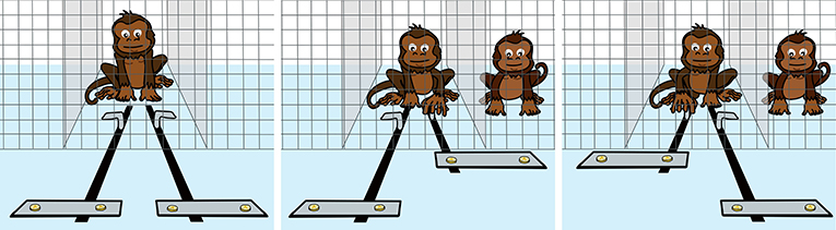 Figure 1 - Test for whether monkeys prefer that others receive rewards, too.