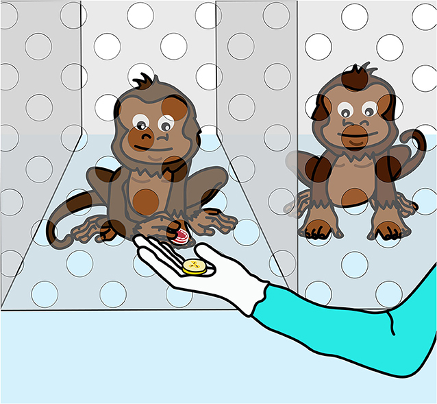 Figure 2 - Test for whether monkeys dislike inequity.