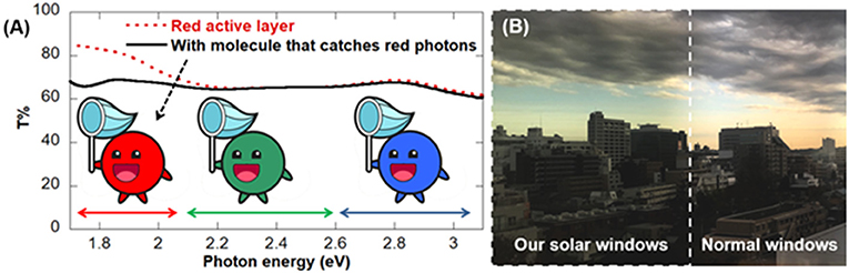 Figure 3 - (A) When we measured the amount of transmitted light through our red windows, we found that T% was 20% higher for red light than for green or blue light (red dotted line).