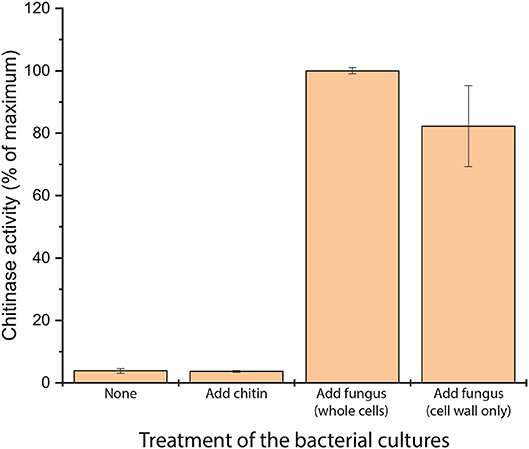 Figure 2 - We grew cultures of Bacillus subtilis natto and treated them by adding either chitin, whole dead fungal cells, or fungal cell walls from dead fungus cells.