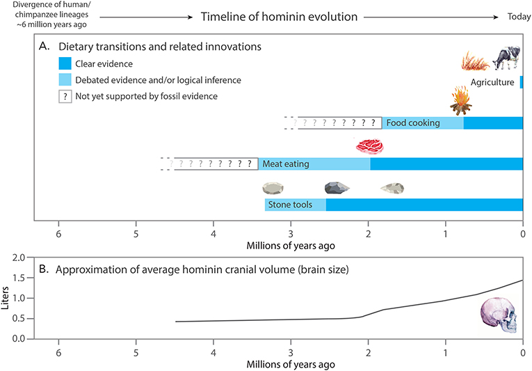 Figure 1 - (A) Dietary transitions over the course of hominin evolution.