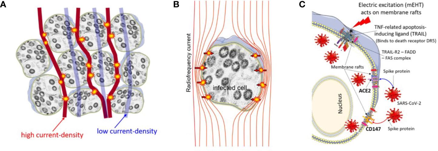 Papilloma rák vírus. A HPV és a méhnyakrák kapcsolata