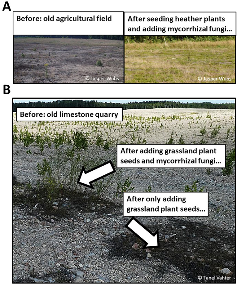Figure 2 - Examples of results of ecosystem restoration projects using mycorrhizal fungi.