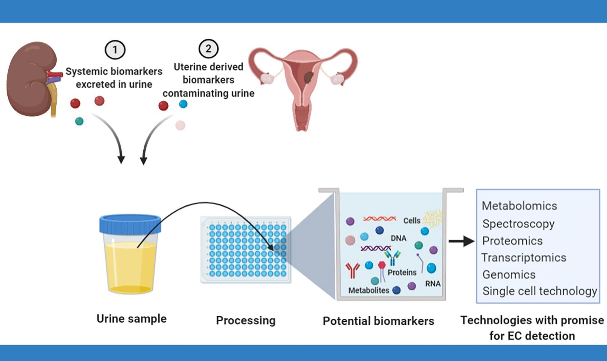 endometrial cancer biomarkers