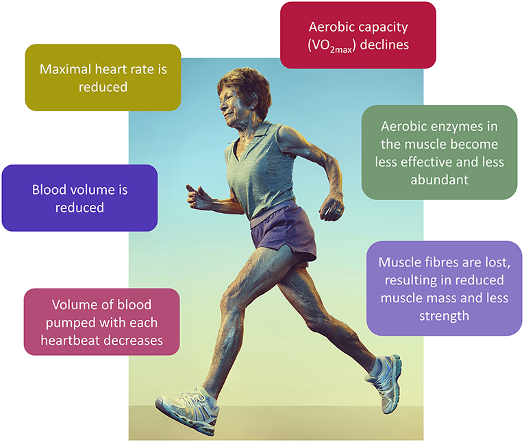 Figure 1 - The effects of aging in athletes.