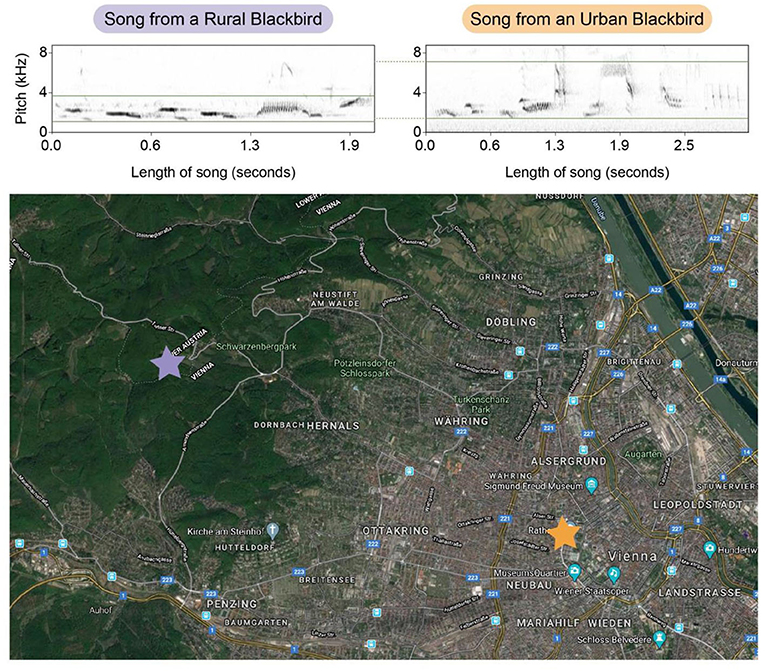 Figure 3 - A study in Austria supported the hypothesis that urban noise can change birds' songs.
