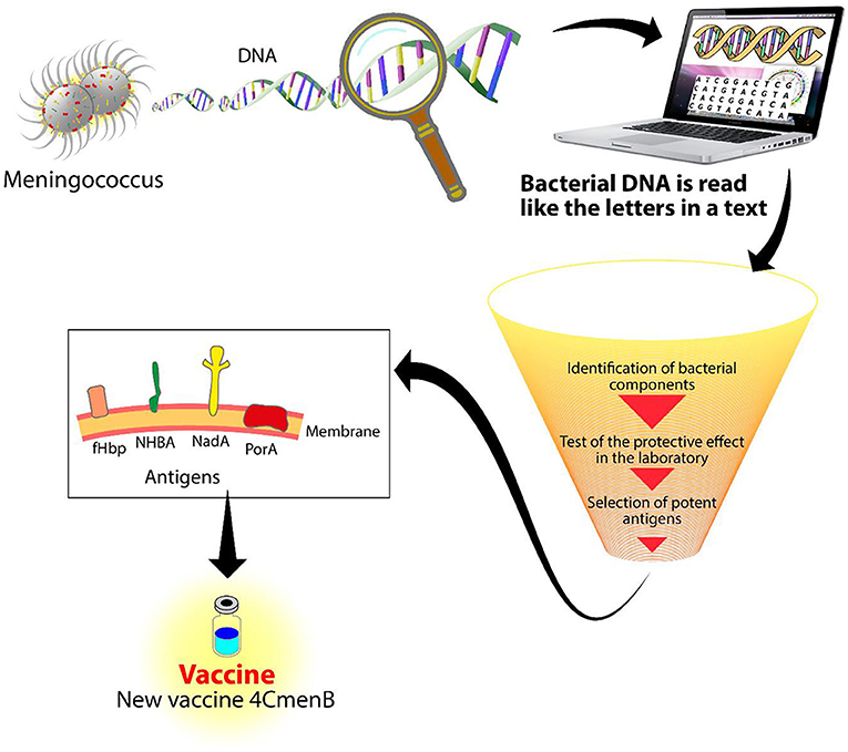 Figure 2 - Reverse vaccinology.