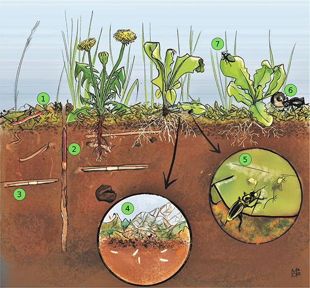 Figure 3 - Soil organisms in action.