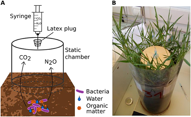 Figure 3 - (A) An experimental chamber can be used to measure GHG emissions in natural environments.