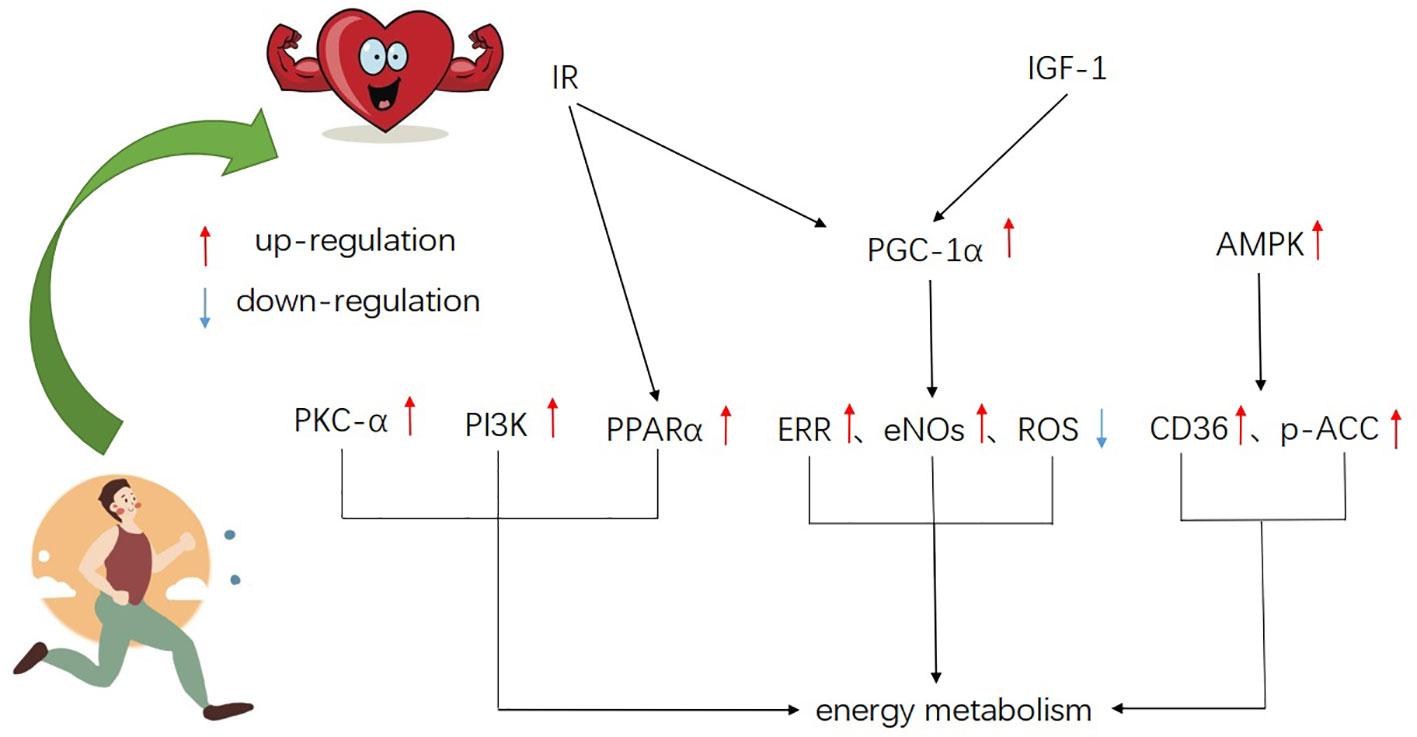 Sfaturi pentru boosting metabolism