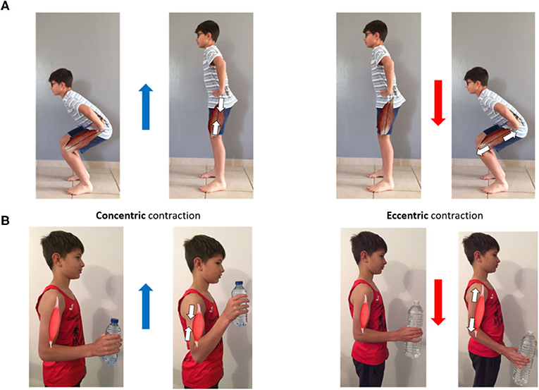 Figure 1 - Concentric and eccentric phases of two movements.