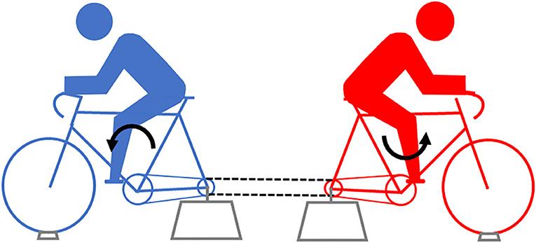 Figure 3 - Eccentric cycling.
