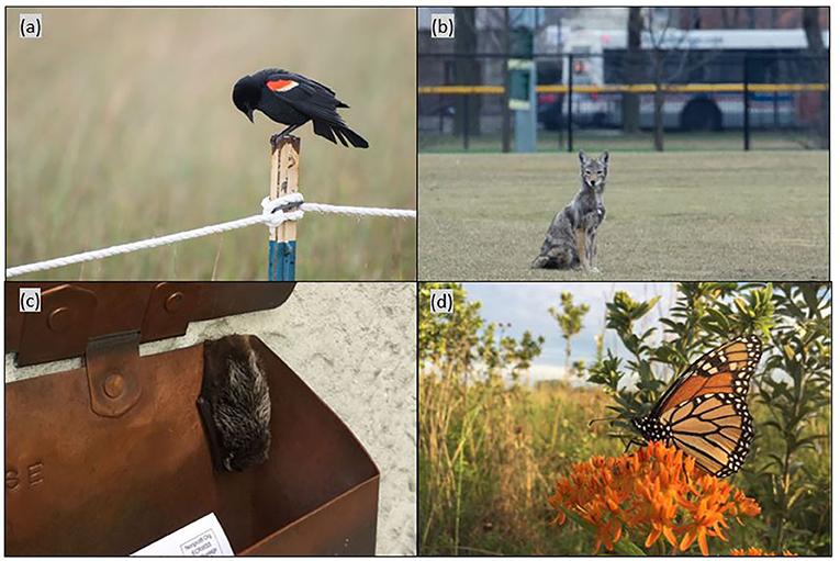 Figure 1 - Examples of common urban wildlife.