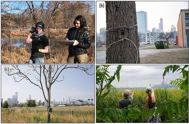 Figure 2 - Methods for monitoring urban wildlife.