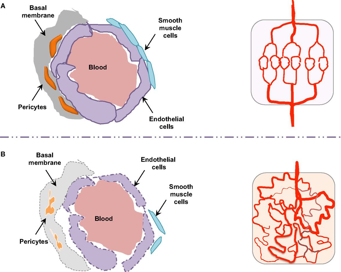 Frontiers | Vascular Permeability and Drug Delivery in ...