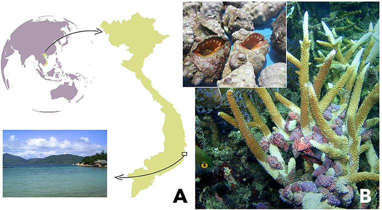 Figure 1 - (A) The Bay of Nha Trang in Vietnam, where our study took place.