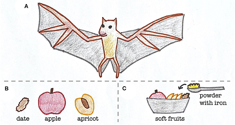 Figure 1 - Diet of Egyptian fruit bats in the wild and at the zoo.