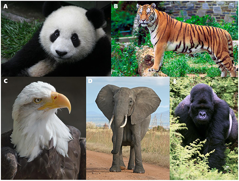 Figure 1 - Examples of common flagship species.