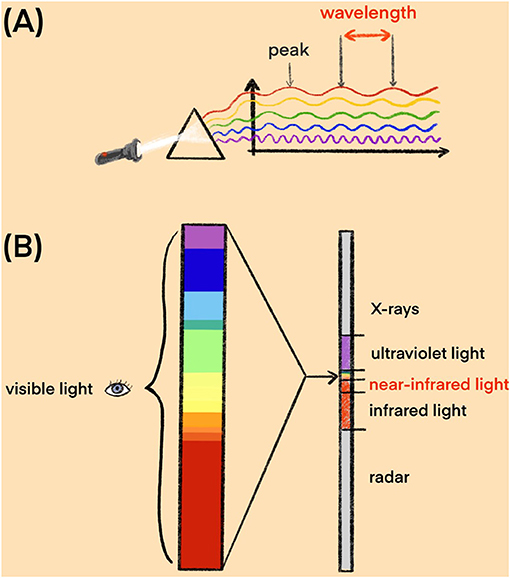 Figure 2 - (A) Each color of light has a specific wavelength.