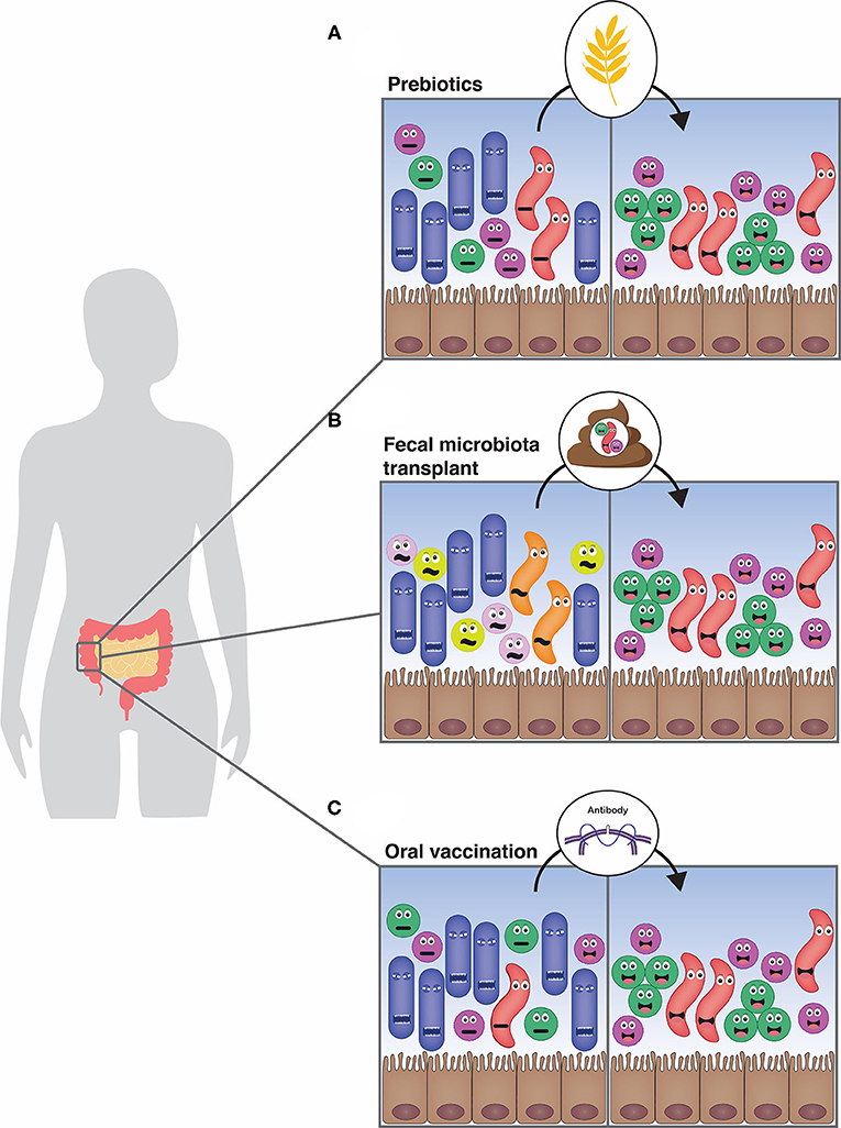 Figure 2 - Manipulating the gut microbiota to improve health.