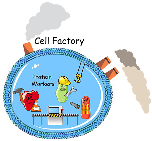 Figure 1 - Proteins are the workers inside your cells.